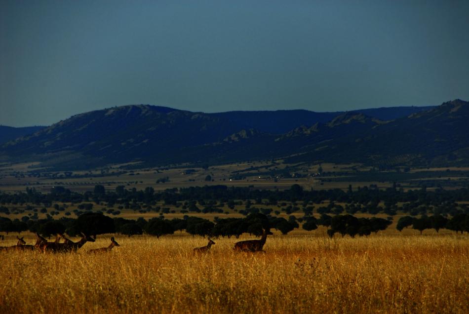 Imagen cortesía de la Junta de Castilla-La Mancha
